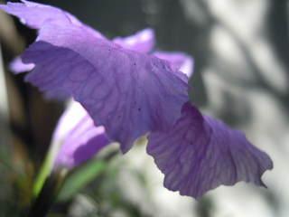 2010_0914AA.JPG
